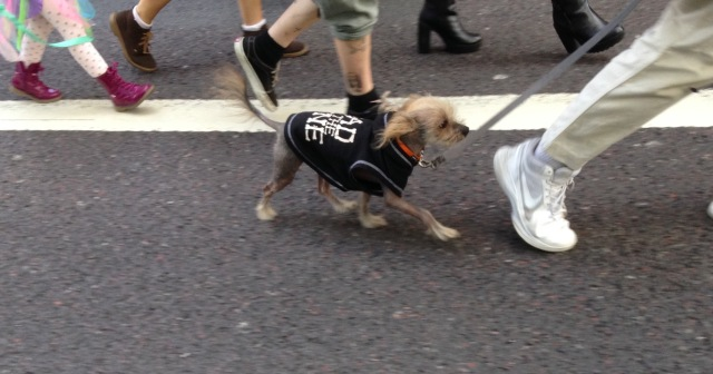 Legs and dog marching in the demo