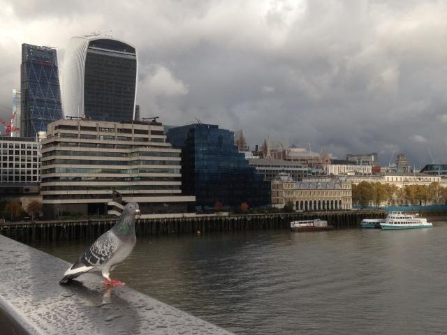 Pigeon watching on London Bridge 1