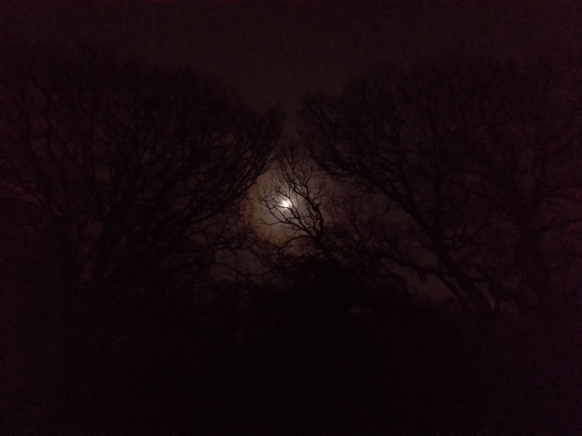 The moon from my window