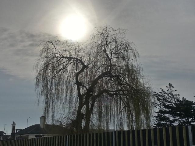 A nap és a szomorú fa