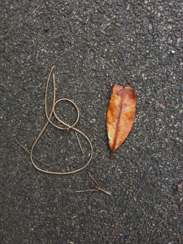 Random beauty on the pavement