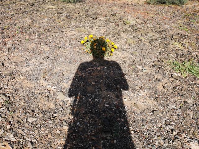 flower-headed-shadow-2