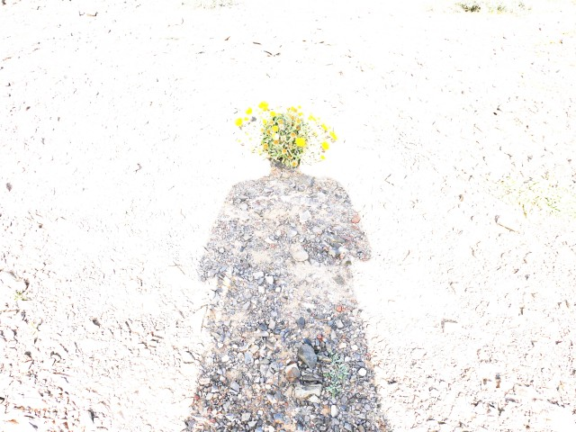 flower-headed-shadow-3