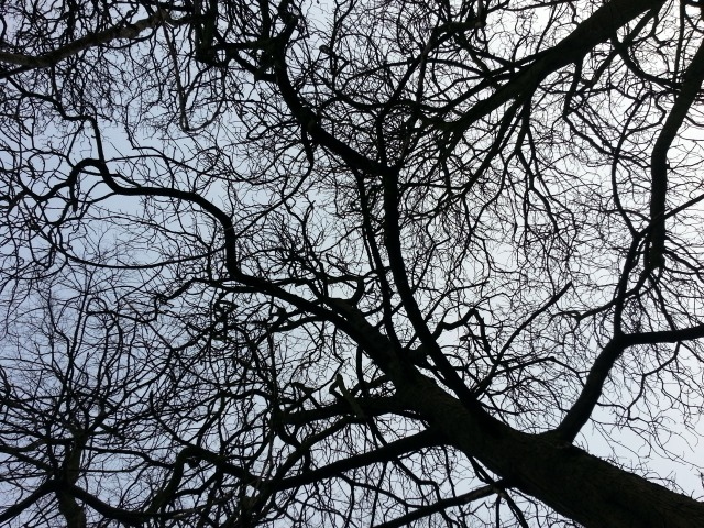 Trees. Complicated relationships