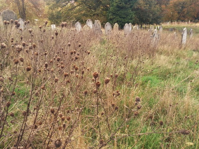 Plumstead Cemetery. Wild flowers